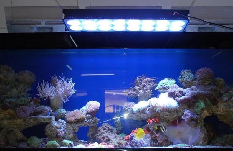 水族灯如何选择?水族灯使用注意事项